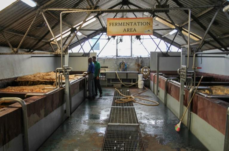 Kadzie fermentacyjne St. Lucia Distillers